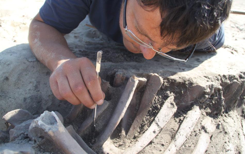 JEA 2020 : le service archéologie s'expose sur internet